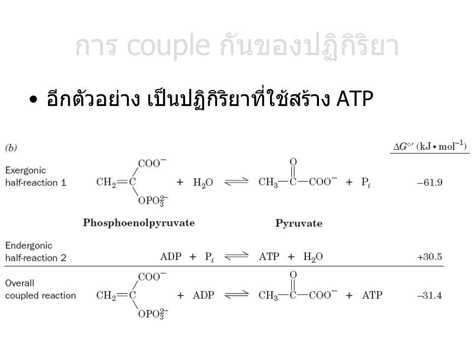การ couple กันของปฏิกิริยา อีกตัวอย่าง เป็นปฏิกิริยาที่ใช้สร้าง ATP