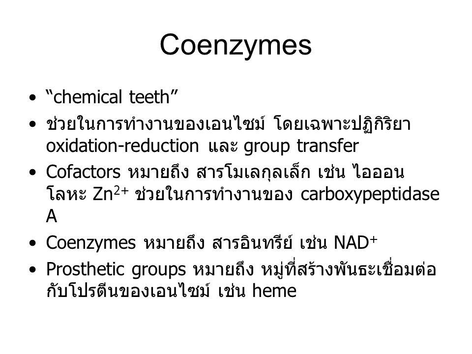 "Coenzymes ""chemical teeth"" ช่วยในการทำงานของเอนไซม์ โดยเฉพาะปฏิกิริยา oxidation-reduction และ group transfer Cofactors หมายถึง สารโมเลกุลเล็ก เช่น ไออ"