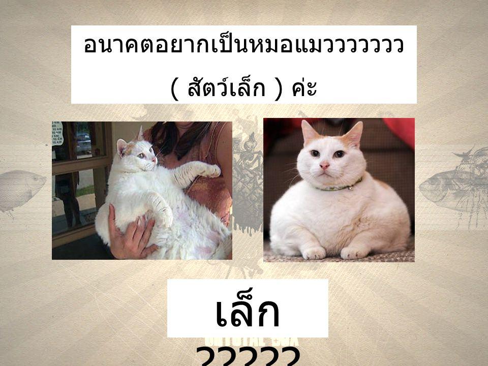 อนาคตอยากเป็นหมอแมววววววว ( สัตว์เล็ก ) ค่ะ เล็ก ?????