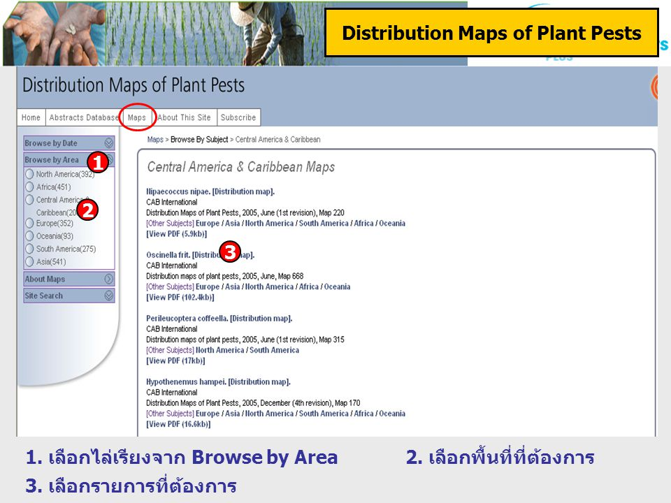 Distribution Maps of Plant Pests 1. เลือกไล่เรียงจาก Browse by Area2.