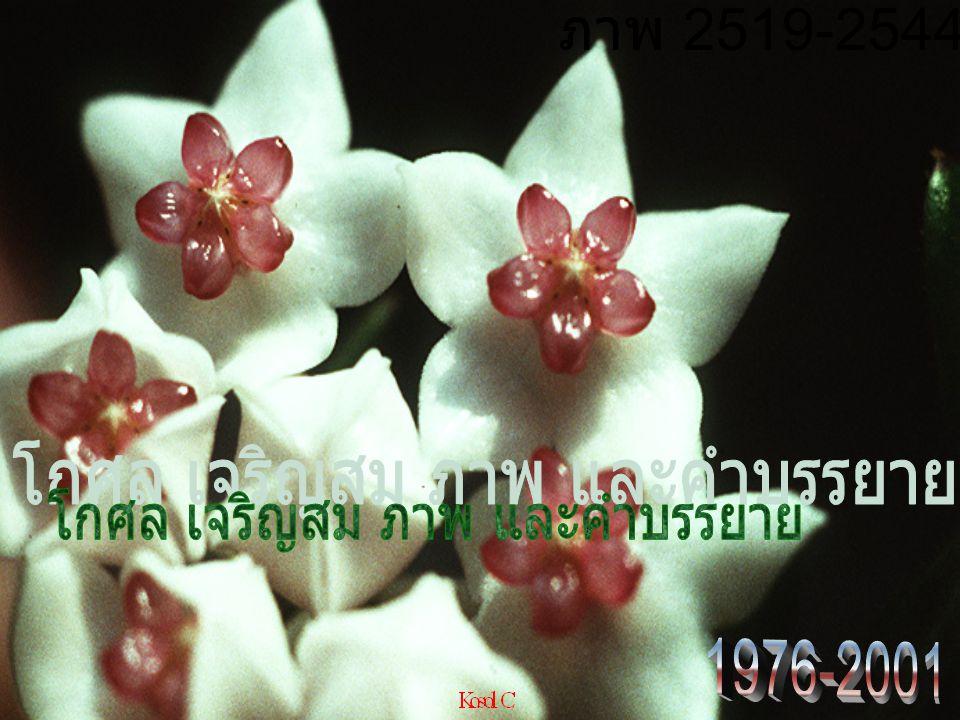 ภาพ 2519-2544