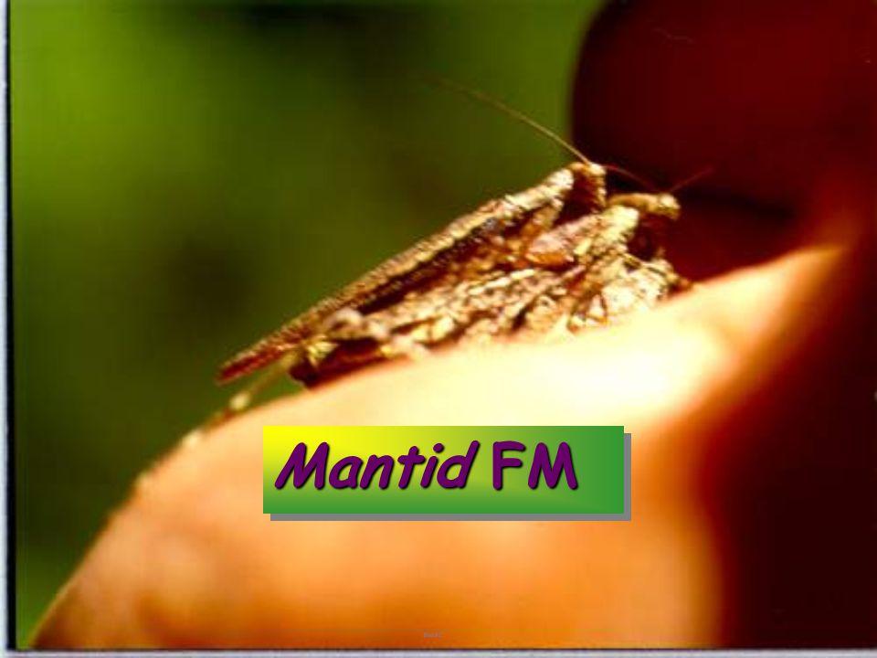 Mantid FM fng