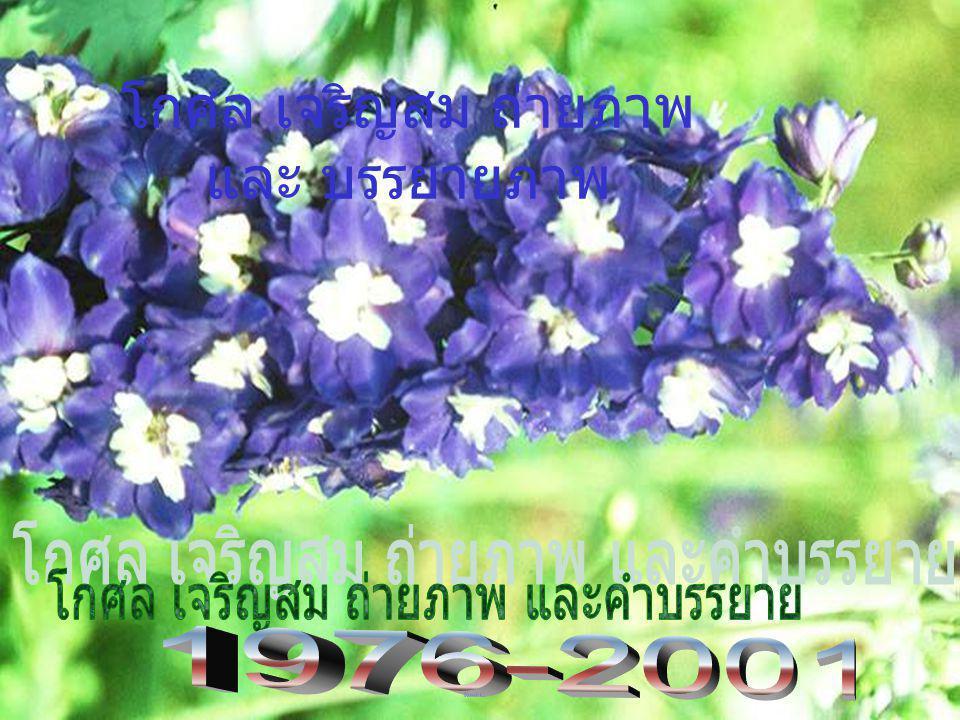 Registered no. 26542 s 1097 Registered no. 26542 S 1097 Registered no. 26542 S 1097 (Tel. 0-3428-1265; Fax. 0-3435-1881. Home 0-2573-2369; 0-9987-5229