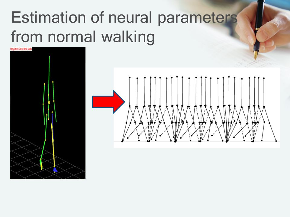 Estimation of neural parameters from normal walking