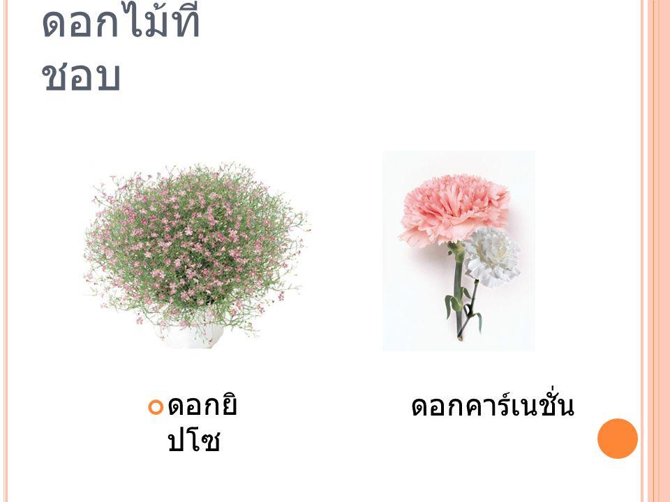 ดอกไม้ที่ ชอบ ดอกยิ ปโซ ดอกคาร์เนชั่น