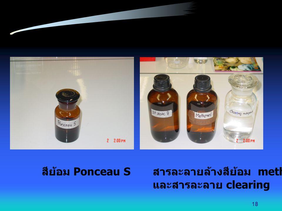 สีย้อม Ponceau S สารละลายล้างสีย้อม methanol และสารละลาย clearing 18
