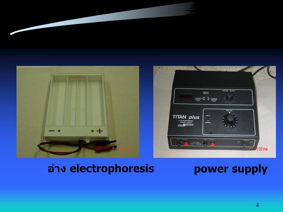 กด applicator ลงในช่องบรรจุสารตัวอย่าง 3-4 ครั้ง นำ applicator มากดลงบน แผ่น cellulose acetate นาน 5 วินาที 15