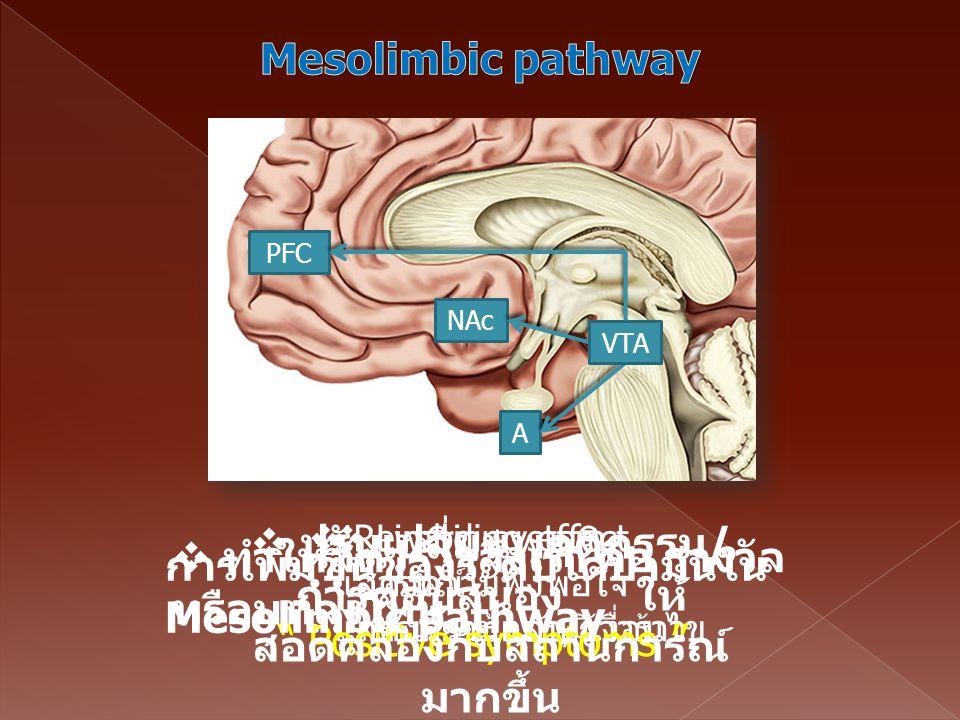 " Limbic system อารมณ์ การเรียนรู้แบบมีเงื่อนไข NAc A PFC VTA  Rewarding effect แสดงความพึงพอใจ แสดงความกลัว/ก้าวร้าว "" Positive symptoms "" การเพิ่มข"