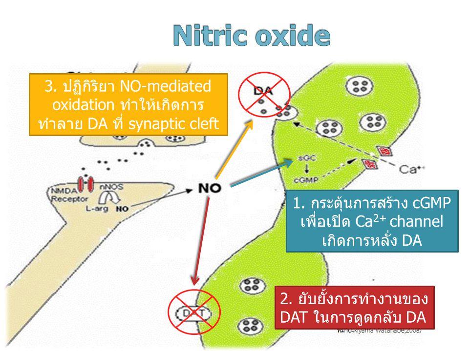 1. กระตุ้นการสร้าง cGMP เพื่อเปิด Ca 2+ channel เกิดการหลั่ง DA 2. ยับยั้งการทำงานของ DAT ในการดูดกลับ DA 3. ปฏิกิริยา NO-mediated oxidation ทำให้เกิด