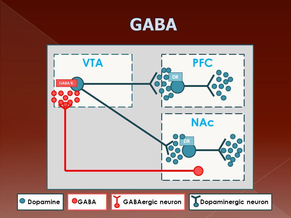 VTAPFC DR NAc DR GABAGABAergic neuronDopamineDopaminergic neuron GABA R.