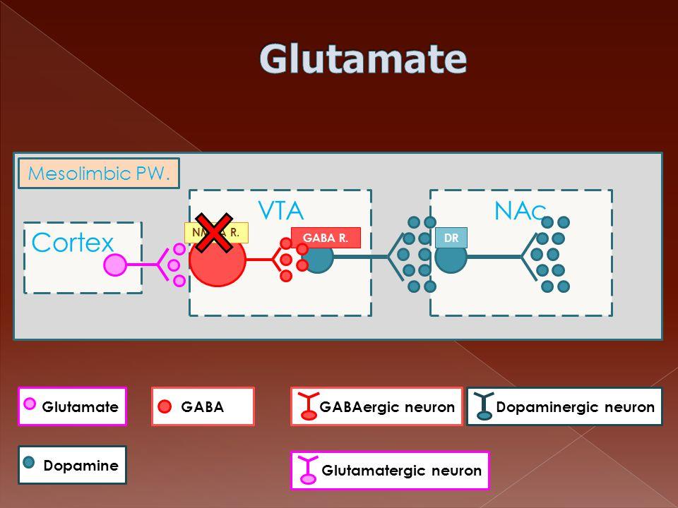 Cortex VTANAc GABA R.DR NMDA R. Mesolimbic PW. Dopamine GlutamateGABAGABAergic neuronDopaminergic neuron Glutamatergic neuron