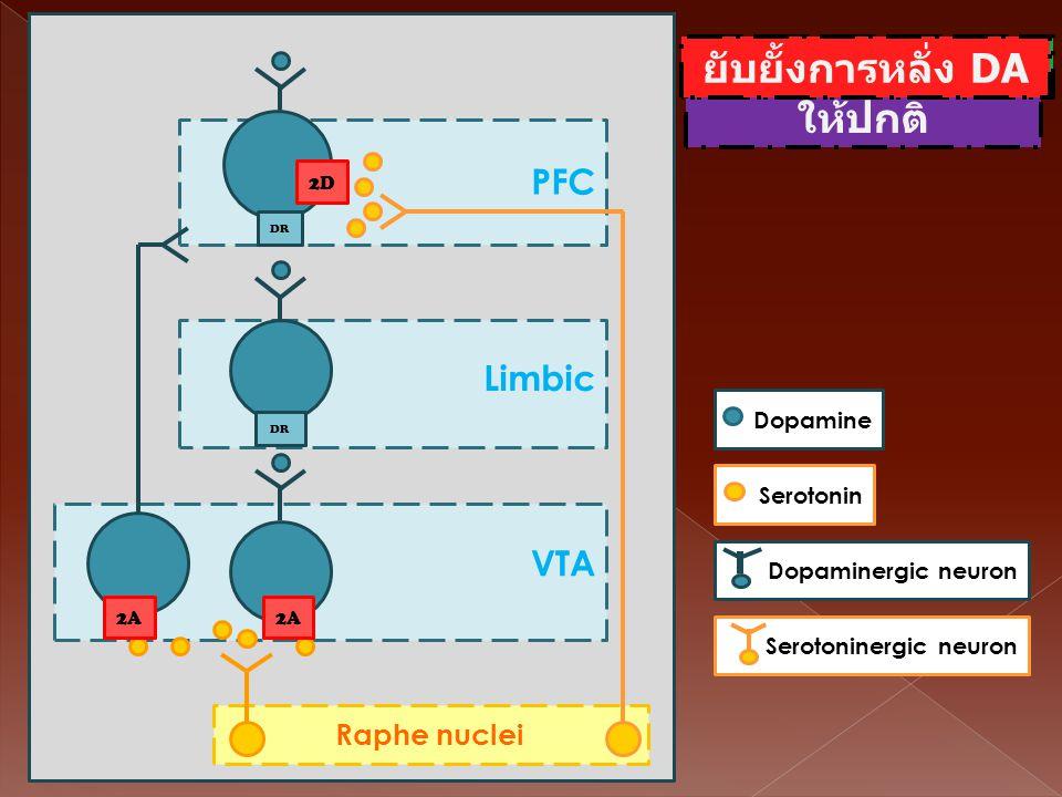 Raphe nuclei PFC VTA Limbic DR 1B 1D 1B 1D DR 1D 1B SerotoninDopamineDopaminergic neuronSerotoninergic neuron ควมคุมระดับ DA ให้ปกติ Raphe nuclei PFC
