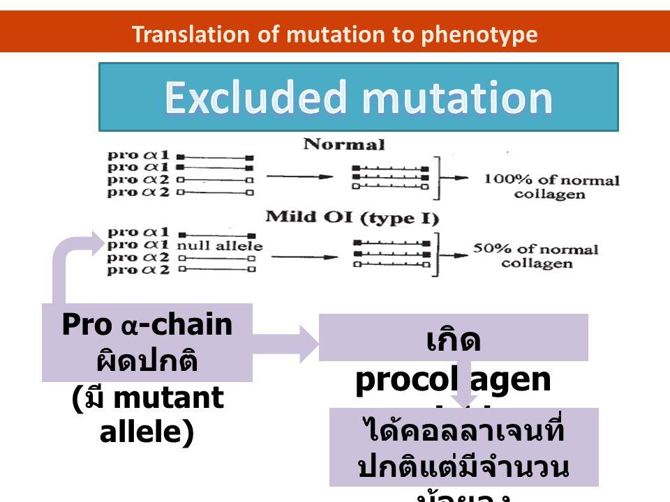 Translation of mutation to phenotype Pro α -chain ผิดปกติ ( มี mutant allele ) เกิด procollagen suicide ได้คอลลาเจนที่ ปกติแต่มีจำนวน น้อยลง
