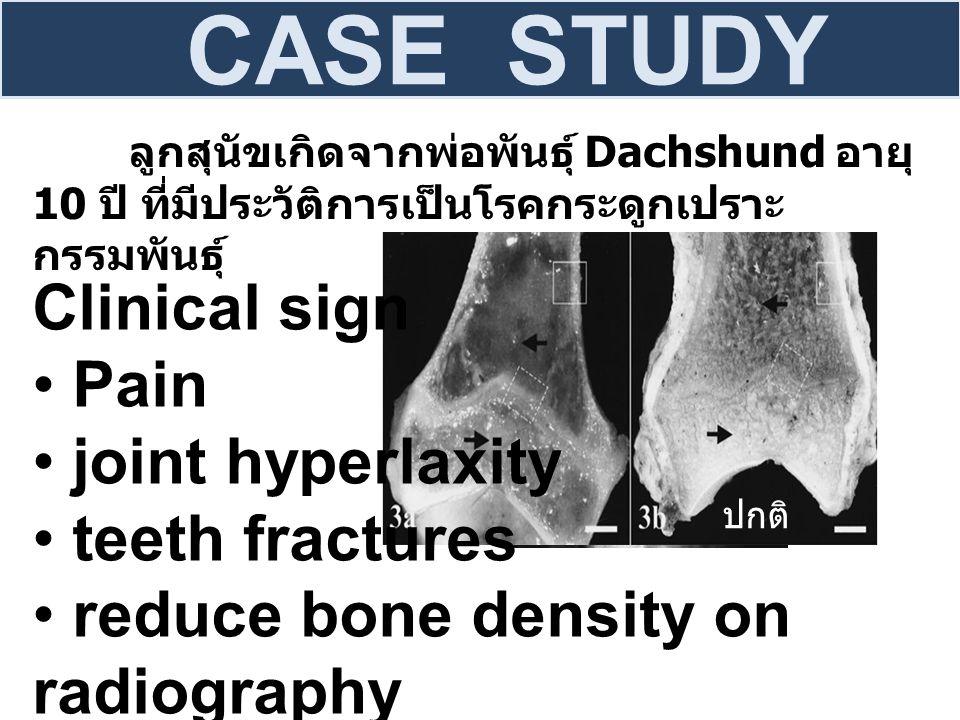 ลูกสุนัขเกิดจากพ่อพันธุ์ Dachshund อายุ 10 ปี ที่มีประวัติการเป็นโรคกระดูกเปราะ กรรมพันธุ์ CASE STUDY ปก ติ Clinical sign Pain joint hyperlaxity teeth fractures reduce bone density on radiography