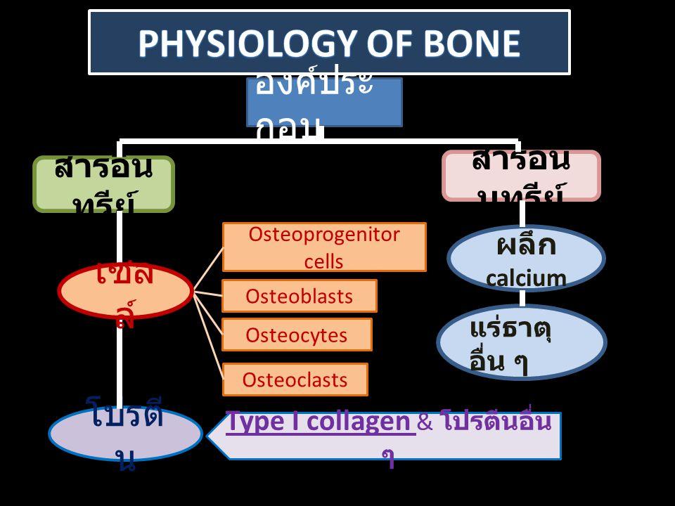 องค์ประ กอบ สารอิน ทรีย์ สารอนิ นทรีย์ โปรตี น Osteoprogenitor cells Osteoblasts Osteocytes Osteoclasts Type I collagen & โปรตีนอื่น ๆ ผลึก calcium แร่ธาตุ อื่น ๆ เซล ล์