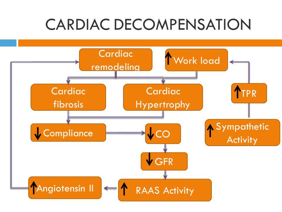 CARDIAC DECOMPENSATION Cardiac remodeling Cardiac fibrosis Cardiac Hypertrophy CO Compliance GFR RAAS Activity Angiotensin II Work load Sympathetic Activity TPR