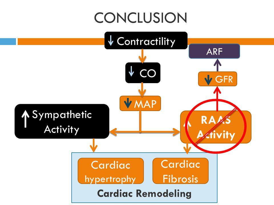Cardiac Remodeling CONCLUSION Contractility CO MAP RAAS Activity Cardiac hypertrophy Cardiac Fibrosis Sympathetic Activity GFR ARF