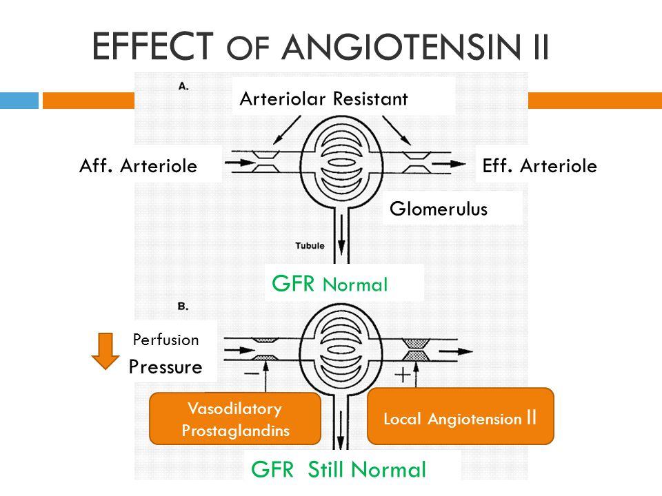 EFFECT OF ANGIOTENSIN II Eff.Arteriole Arteriolar Resistant Aff.