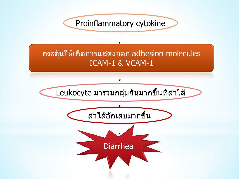 ลำไส้อักเสบมากขึ้น Leukocyte มารวมกลุ่มกันมากขึ้นที่ลำไส้ Proinflammatory cytokine