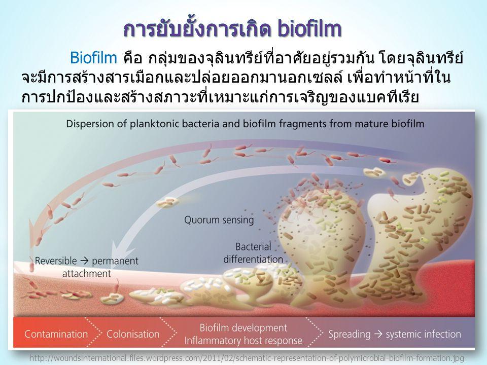 Biofilm คือ กลุ่มของจุลินทรีย์ที่อาศัยอยู่รวมกัน โดยจุลินทรีย์ จะมีการสร้างสารเมือกและปล่อยออกมานอกเซลล์ เพื่อทำหน้าที่ใน การปกป้องและสร้างสภาวะที่เหมาะแก่การเจริญของแบคทีเรีย http://woundsinternational.files.wordpress.com/2011/02/schematic-representation-of-polymicrobial-biofilm-formation.jpg