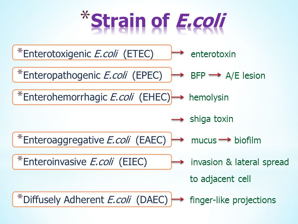 * Enterotoxigenic E.coli (ETEC) enterotoxin * Enteropathogenic E.coli (EPEC) BFP A/E lesion * Enterohemorrhagic E.coli (EHEC) hemolysin shiga toxin *