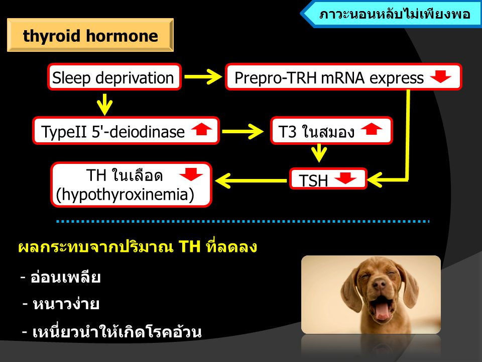 TH ในเลือด (hypothyroxinemia) ผลกระทบจากปริมาณ TH ที่ลดลง Sleep deprivationPrepro-TRH mRNA express TypeII 5 -deiodinaseT3 ในสมอง TSH - อ่อนเพลีย - หนาวง่าย - เหนี่ยวนำให้เกิดโรคอ้วน ภาวะนอนหลับไม่เพียงพอ thyroid hormone