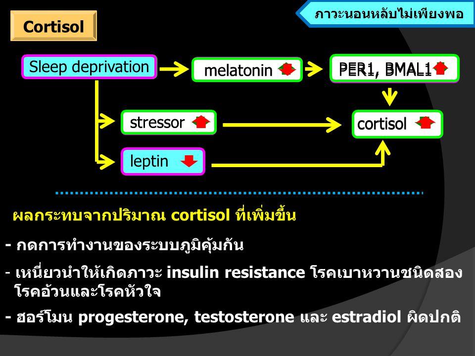 sleep melatonin stressor cortisol PER1, BMAL1 leptin Sleep deprivation ผลกระทบจากปริมาณ cortisol ที่เพิ่มขึ้น - กดการทำงานของระบบภูมิคุ้มกัน - เหนี่ยวนำให้เกิดภาวะ insulin resistance โรคเบาหวานชนิดสอง โรคอ้วนและโรคหัวใจ - ฮอร์โมน progesterone, testosterone และ estradiol ผิดปกติ melatonin PER1, BMAL1 cortisol stressor Cortisol ขณะนอนหลับ ภาวะนอนหลับไม่เพียงพอ