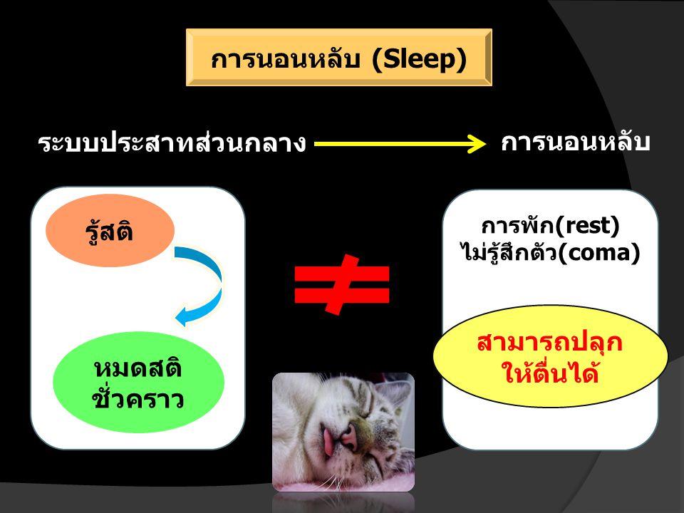 ระบบประสาทส่วนกลาง การพัก(rest) ไม่รู้สึกตัว(coma) รู้สติ หมดสติ ชั่วคราว สามารถปลุก ให้ตื่นได้ การนอนหลับ การนอนหลับ (Sleep)