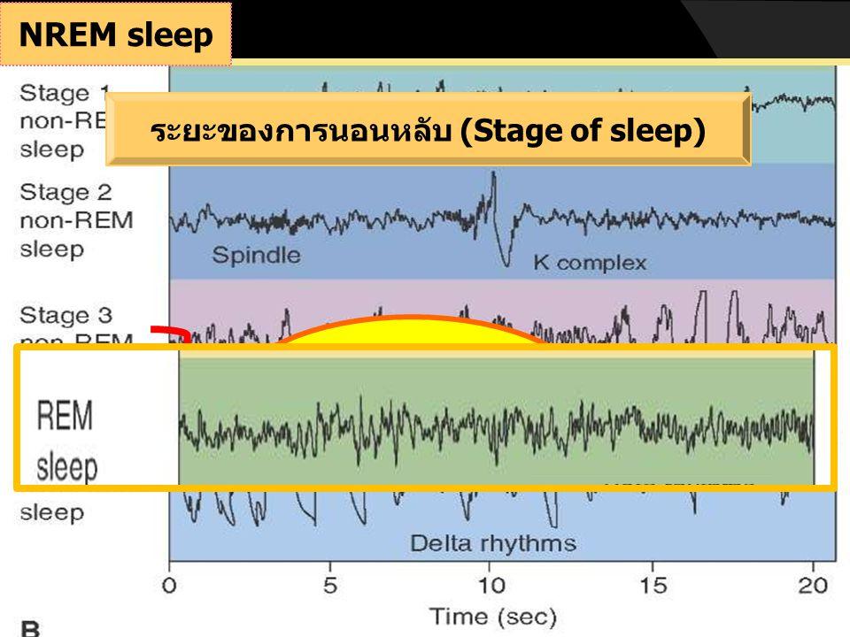 ตื่นนอน (sleep latency) NREM ระยะ 1 NREM ระยะ 4 NREM ระยะ 3 NREM ระยะ 2 REM NREM ระยะ 2 วงจรการนอนหลับ(Sleep cycle)