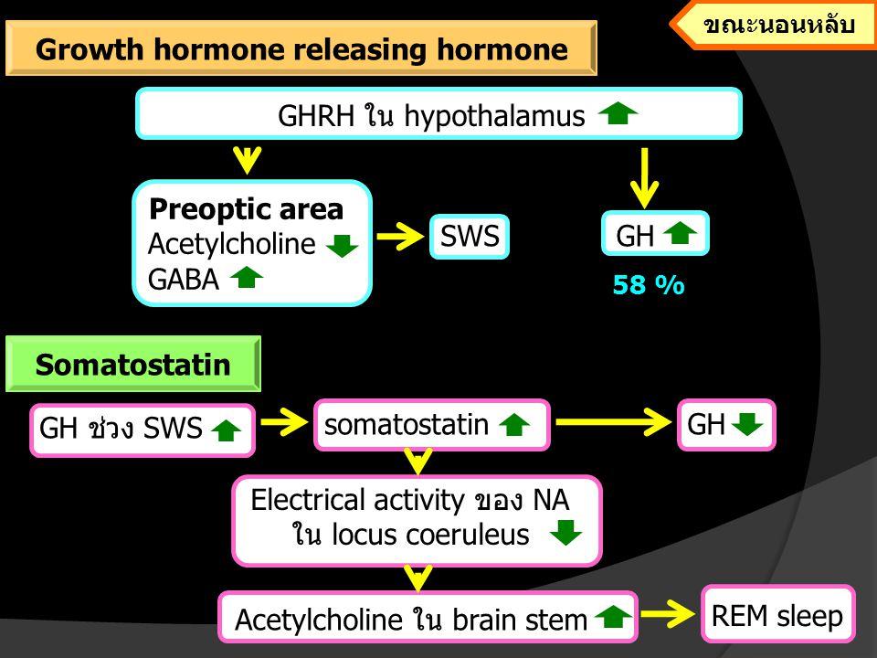 REM sleep deprivation stress Electrical activity ของ NA ใน locus coeruleus wakefulnessSomatostatin GH Sleep deprivationGHRH mRNA GH ภาวะนอนหลับไม่เพียงพอ Growth hormone releasing hormone Somatostatin