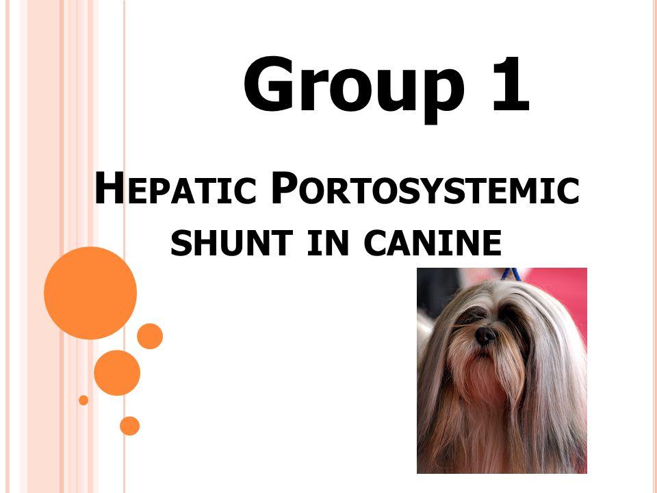 Portosystemic Shunt เป็นความผิดปกติของหลอดเลือดดำใน ช่องท้อง เกิดการเชื่อต่อระหว่าง Portal vein กับ Systemic circulation โดยไม่ผ่านตับ ทำให้ เซลล์ตับไม่สามารถเผาผลาญสารอาหาร และ สารพิษในระบบได้