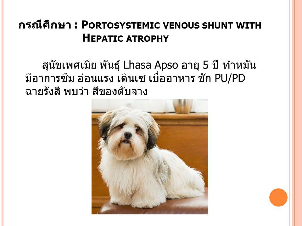 กรณีศึกษา : P ORTOSYSTEMIC VENOUS SHUNT WITH H EPATIC ATROPHY สุนัขเพศเมีย พันธุ์ Lhasa Apso อายุ 5 ปี ทำหมัน มีอาการซึม อ่อนแรง เดินเซ เบื่ออาหาร ชัก