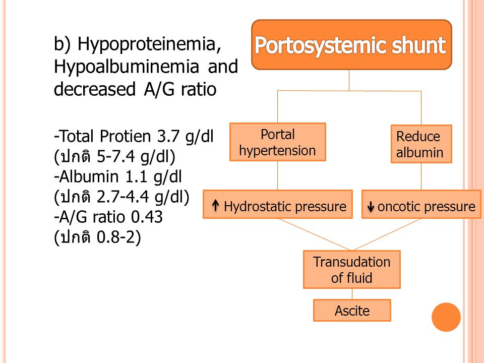 b) Hypoproteinemia, Hypoalbuminemia and decreased A/G ratio -Total Protien 3.7 g/dl (ปกติ 5-7.4 g/dl) -Albumin 1.1 g/dl (ปกติ 2.7-4.4 g/dl) -A/G ratio