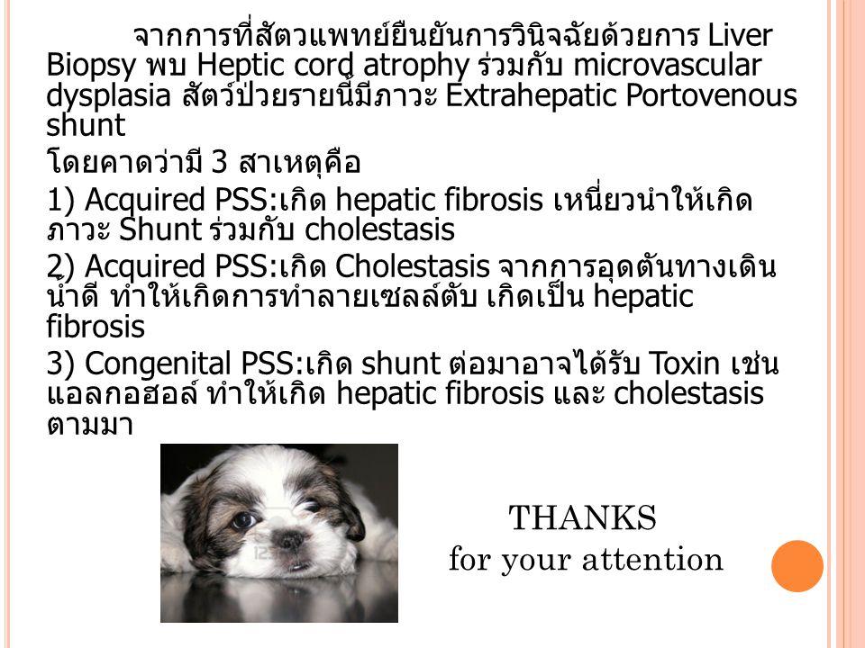 จากการที่สัตวแพทย์ยืนยันการวินิจฉัยด้วยการ Liver Biopsy พบ Heptic cord atrophy ร่วมกับ microvascular dysplasia สัตว์ป่วยรายนี้มีภาวะ Extrahepatic Port