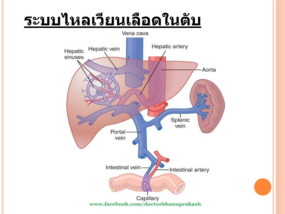 Portosystemic shunt (PSS) แบ่งได้ 2 ประเภท คือ - Congenital (primary) portosystemic shunt - Acquired (secondary) portosystemic shunt