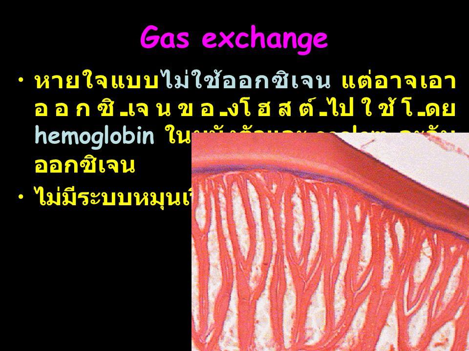 12 Gas exchange หายใจแบบไม่ใช้ออกซิเจน แต่อาจเอา ออกซิเจนของโฮสต์ไปใช้โดย hemoglobin ในผนังตัวและ coelom จะจับ ออกซิเจน ไม่มีระบบหมุนเวียน