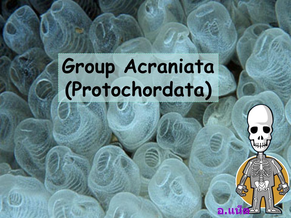 Phylum Chordata 1.
