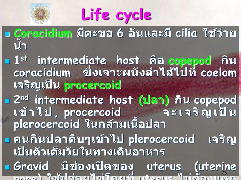 73 Life cycle Coracidium มีตะขอ 6 อันและมี cilia ใช้ว่าย น้ำ Coracidium มีตะขอ 6 อันและมี cilia ใช้ว่าย น้ำ 1 st intermediate host คือ copepod กิน coracidium ซึ่งเจาะผนังลำไส้ไปที่ coelom เจริญเป็น procercoid 1 st intermediate host คือ copepod กิน coracidium ซึ่งเจาะผนังลำไส้ไปที่ coelom เจริญเป็น procercoid 2 nd intermediate host ( ปลา ) กิน copepod เข้าไป, procercoid จะเจริญเป็น plerocercoid ในกล้ามเนื้อปลา 2 nd intermediate host ( ปลา ) กิน copepod เข้าไป, procercoid จะเจริญเป็น plerocercoid ในกล้ามเนื้อปลา คนกินปลาดิบๆเข้าไป plerocercoid เจริญ เป็นตัวเต็มวัยในทางเดินอาหาร คนกินปลาดิบๆเข้าไป plerocercoid เจริญ เป็นตัวเต็มวัยในทางเดินอาหาร Gravid มีช่องเปิดของ uterus (uterine pore) ใช้ปล่อยไข่โดยที่ uterus ไม่ต้องแตก แขนง Gravid มีช่องเปิดของ uterus (uterine pore) ใช้ปล่อยไข่โดยที่ uterus ไม่ต้องแตก แขนง