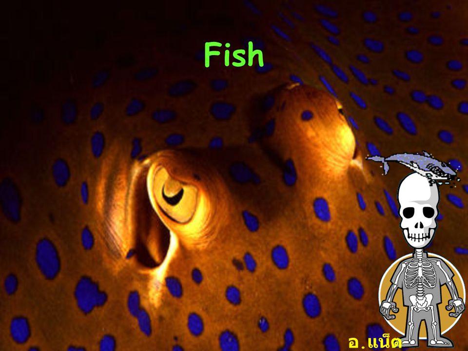 Fish อ. แน็ต