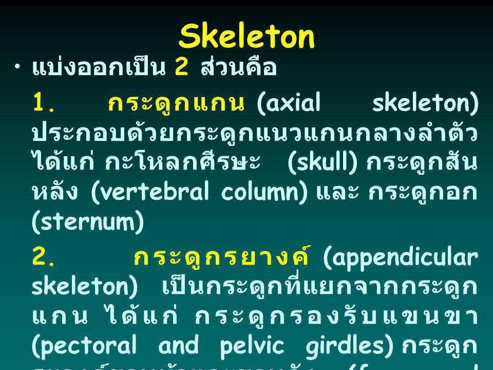 แบ่งออกเป็น 2 ส่วนคือ 1. กระดูกแกน (axial skeleton) ประกอบด้วยกระดูกแนวแกนกลางลำตัว ได้แก่ กะโหลกศีรษะ (skull) กระดูกสัน หลัง (vertebral column) และ ก