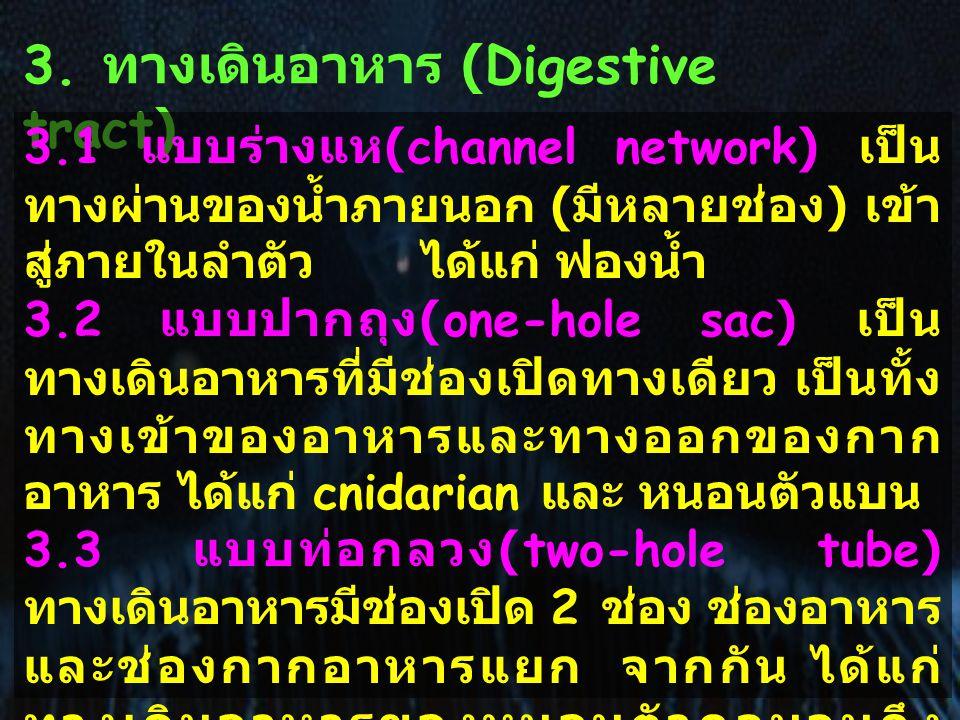 3. ทางเดินอาหาร (Digestive tract) 3.1 แบบร่างแห (channel network) เป็น ทางผ่านของน้ำภายนอก ( มีหลายช่อง ) เข้า สู่ภายในลำตัว ได้แก่ ฟองน้ำ 3.2 แบบปากถ