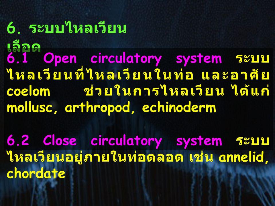 6. ระบบไหลเวียน เลือด 6.1 Open circulatory system ระบบ ไหลเวียนที่ไหลเวียนในท่อ และอาศัย coelom ช่วยในการไหลเวียน ได้แก่ mollusc, arthropod, echinoder