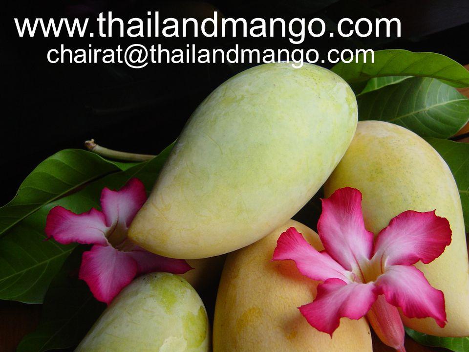 chairat@thailandmango.com www.thailandmango.com