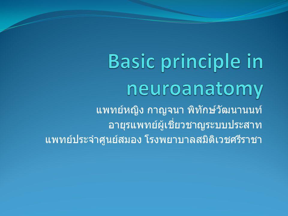 ความรู้สึก ปวด ร้อน หนาว สัมผัสชนิดหยาบ และ ความรู้สึก กด แปลผลได้ที่ระดับ Thalamus ความรู้สึก เจ็บ อุ่น เย็น สัมผัสชนิดละเอียด และ การแยกจุด สัมผัส รวมทั้ง proprioception นั้นแปลผลได้ที่ cerebral cortex