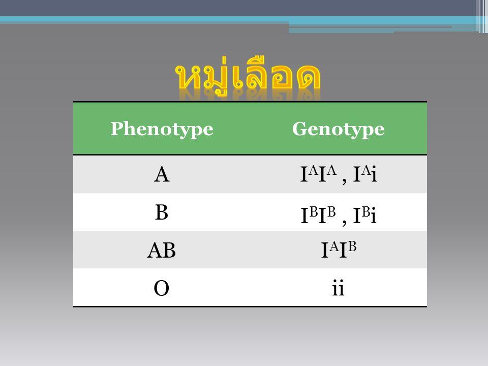 PhenotypeGenotype AI A I A, I A i B I B I B, I B i ABIAIBIAIB Oii