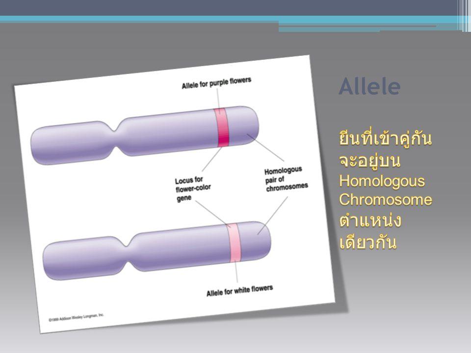 Genotype ยีนที่อยู่ ด้วยกันเป็นคู่ AA, Bb, nn Phenotype ลักษณะที่ ปรากฎซึ่ง เกิดจากการ แสดงออก ของยีน ต้นสูง, ดอกสี ส้ม