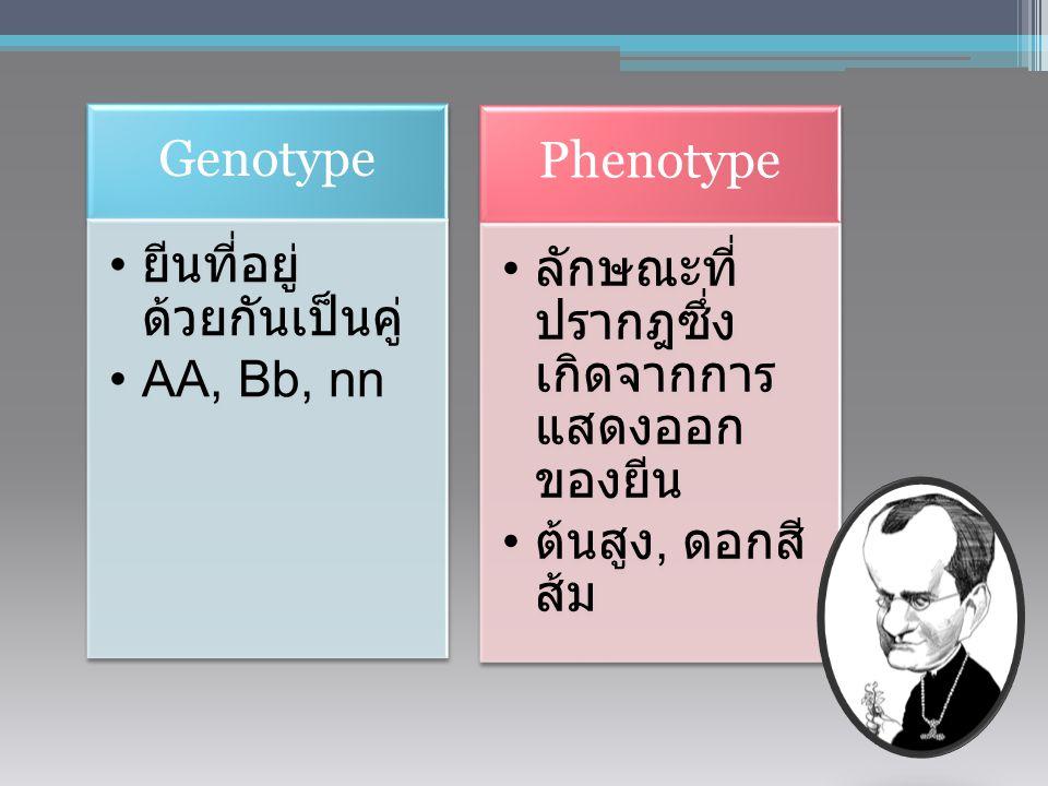 Homologous Dominant TT DD KK Homologous Recessive tt dd kk Heterozygous genotype Tt Dd Kk