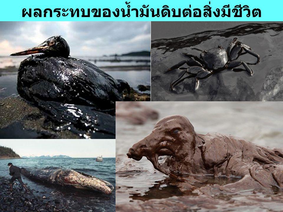 4 ผลกระทบของน้ำมันดิบต่อสิ่งมีชีวิต