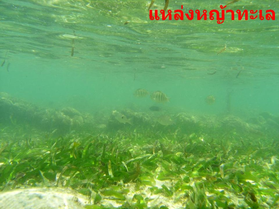 แหล่งท่องเที่ยวทางทะเล 8 ภาพ : ศักดิ์อนันต์ ปลาทอง ภาพ : ดร. ธรณ์ ธำรงค์นาวาสวัสดิ์