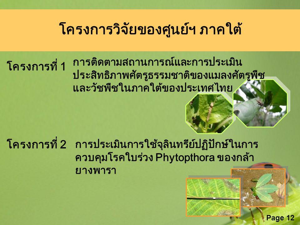 Page 12 โครงการวิจัยของศูนย์ฯ ภาคใต้ การติดตามสถานการณ์และการประเมิน ประสิทธิภาพศัตรูธรรมชาติของแมลงศัตรูพืช และวัชพืชในภาคใต้ของประเทศไทย โครงการที่